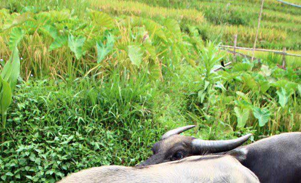 Hanoi und das Bergland des Nordens mit Trekking